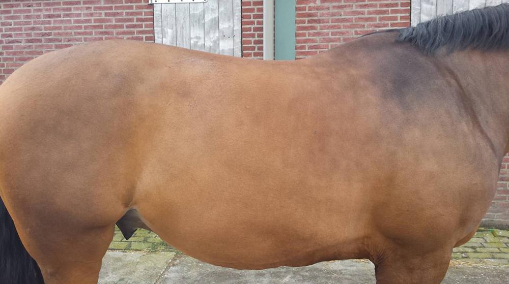 Voeding en algemene gezondheid van het paard