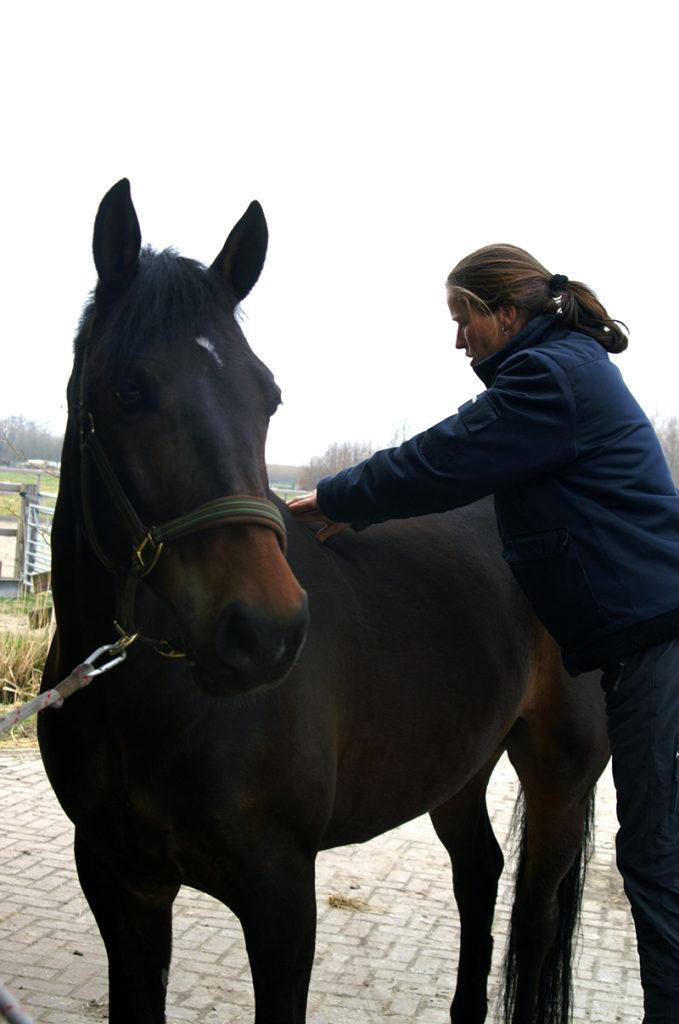 Linda van Diepen, Horse in Motion